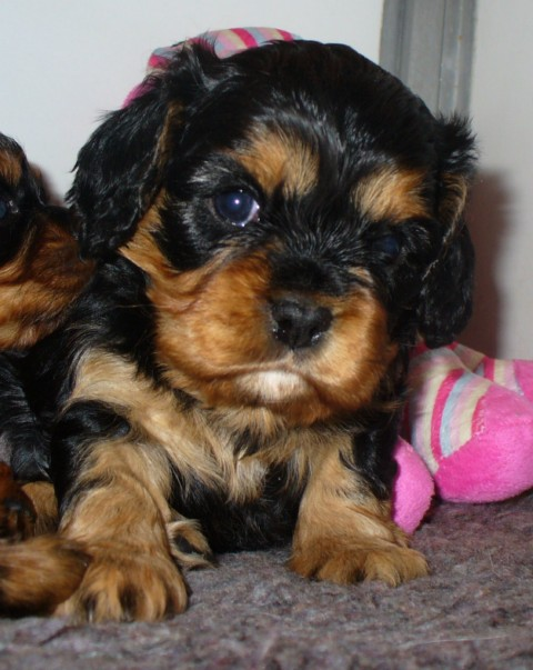 pups smoks en Happy 013 640x480